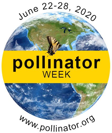 pollinator week