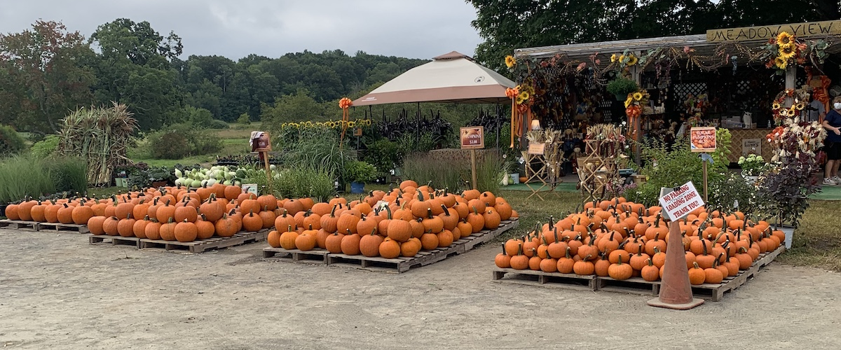 pumpkins and plants for sale