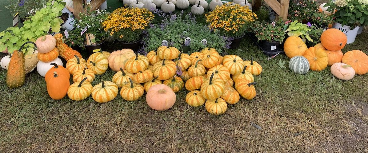 pumpkins and gourds for fall decorating