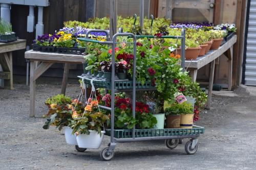 Customer's carriage of spring hangers and annuals.
