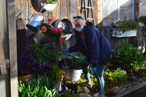 Sue-early-morning-watering