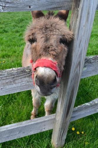 our pet donkey, Jim